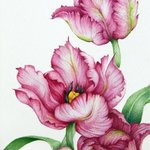 red parrot tulips By Tatiana Azarchik