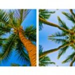 A Lovely Coco Palms Evening It Is, Kaleidoscopic Diptych By Tiger Lily Jones