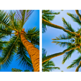 Tiger Lily Jones Artwork A Lovely Coco Palms Evening It Is, Kaleidoscopic Diptych, 2011 Cibachrome Photograph, Ecological