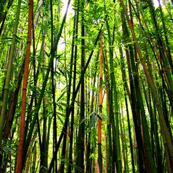 , Into The Bamboo Forest, Botanical, $261