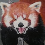 Red panda By Tina Beck