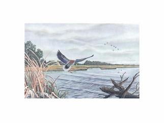 Birds Oil Painting by Robert Tittle Title: Mallard Rest Stop, created in 2004