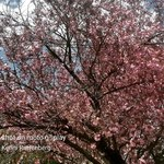 spring in monroe By Kimberly Ruttenberg