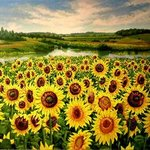 Sunflowers By Sergey Puzirchenko