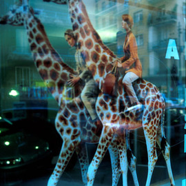 Vincenzo Montella Artwork giraffes, 2001 Cibachrome Photograph, Visionary