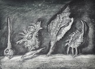 Leonid Stroganov: 'shells', 2013 Etching, Nature. Artist Description: At this work depicted shells. They are turn down, and such transformation gives of their forms fantastic view. As if  they are meteorites, for example. ...