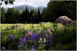Artist: Wayne King - Title: Lupine in the Shadow of Cannon Mountain - Medium: Color Photograph - Year: 2008