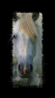 Wayne King: 'Pink on Blonde', 2014 Poster, Fantasy.  Blond horse with a pink blaze. Manipulated color image.  ...