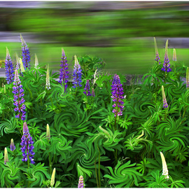 Wayne King: 'Wind in the Lupines', 2012 Color Photograph, Landscape. Artist Description:  Manipulated color image with wonderful emotive appeal. Signed unique original print with certif of authenticity ...