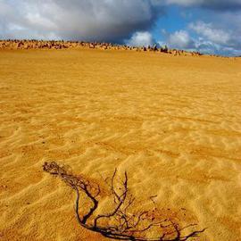 Western Australian Desert