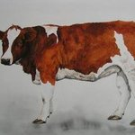 young cow By Pim Van Der Wel