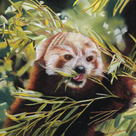 Karen Turner Artwork RED PANDA, 2015 Pastel, Wildlife