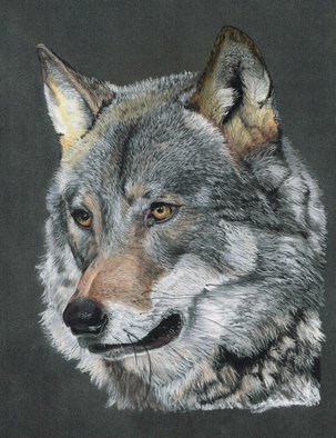 Karen Turner Artwork SILVER SHADOW, 2013 Pastel, Wildlife