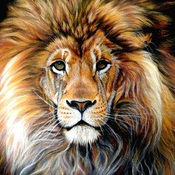 , Bold Lion, Animals, Nfs