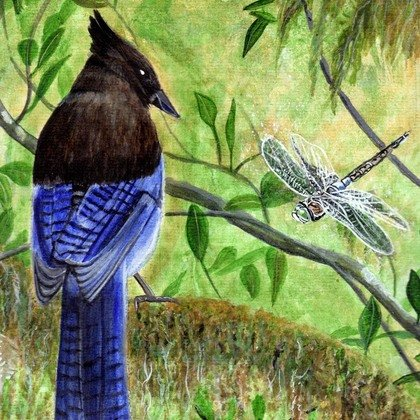 , Blue Jay And Dragonfly, Birds, Nfs