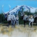 mt shasta elk By Michaeline Mcdonald