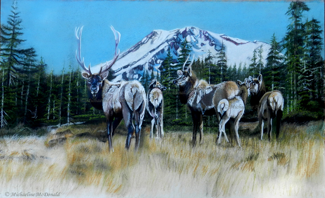 Michaeline Mcdonald  'Mt Shasta Elk', created in 2013, Original Pastel.