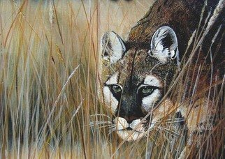 Michaeline Mcdonald: 'the stalker', 2001 Acrylic Painting, Animals. Artist Description: Acrylic on canvas painting of a cougar stalking through tall grass. ...