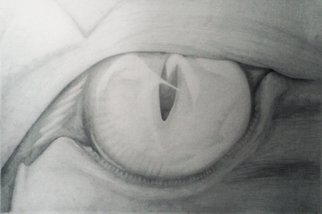 Pencil Drawing by Yohana Moshi titled: The lions Eye, 2014