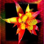 Royal Red Flower Canvas Very Colorful, Andrew Young