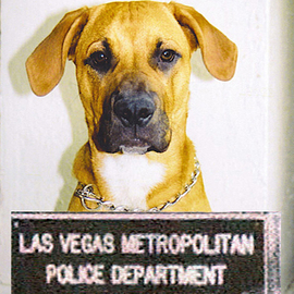 Rickie Dickerson Artwork Bad Dog, 2004 Color Photograph, Portrait