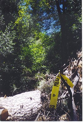 Rickie Dickerson: 'Bad Vibes', 2005 Color Photograph, Americana.  I came across this horrid implication of something very ugly while hiking in the beautiful mountains of Southern California. Scary. ...