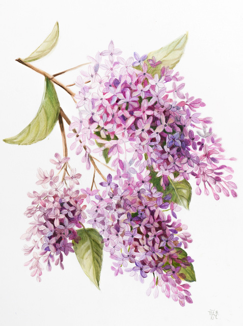 Marsha Bowers  'Lilacs', created in 2019, Original Paper.