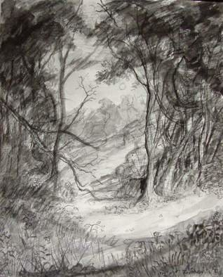 Landscape Charcoal Drawing by Dana Zivanovits Title: FOREST CLEARING, created in 1991