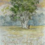 OLD OAK TREE By Dana Zivanovits