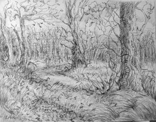 Landscape Charcoal Drawing by Dana Zivanovits Title: WINTER WOODS, created in 2004