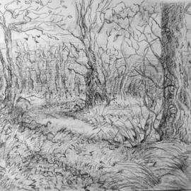 Dana Zivanovits Artwork WINTER WOODS, 2004 Charcoal Drawing, Landscape