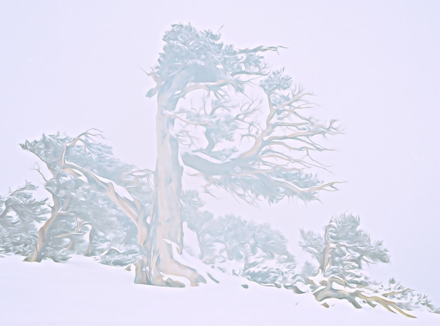 Steve Tohari  'Ancient Tree In Fog And Snow', created in 2018, Original Photography Color.