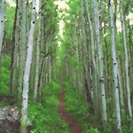 aspen trail 1 By Steve Tohari