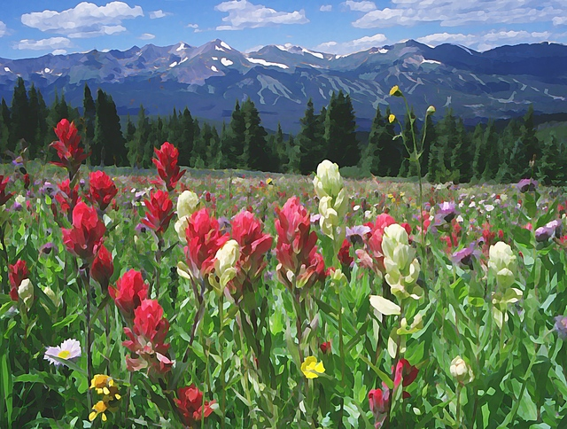 Steve Tohari  'Wildflowers Breckenridge 1', created in 2018, Original Photography Color.