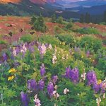 wildflowers crested butte 1 By Steve Tohari