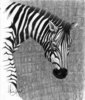 Cassandra Gordon-Harris - Zebra, Animals