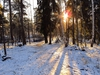 Susan Wellington - Morning sun in the snow Stockholm Forest Landscape, Landscape